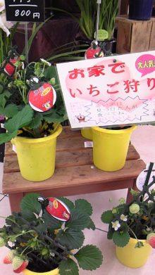 東岡崎 もつ鍋屋の社長ブログ-110121_1012~01.jpg